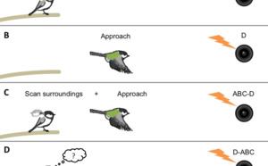 Las aves también se comunican sintácticamente